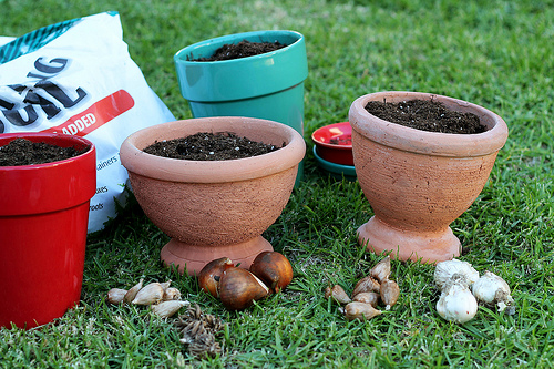 Planting Now for Gifts