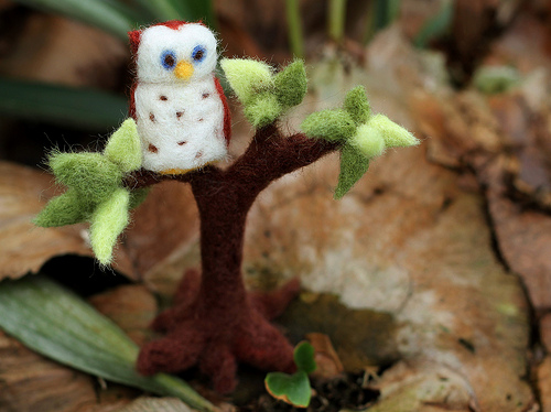 Owl on the Staghorn Ferns