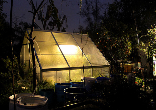 Photo Saturday: Greenhouse at Night