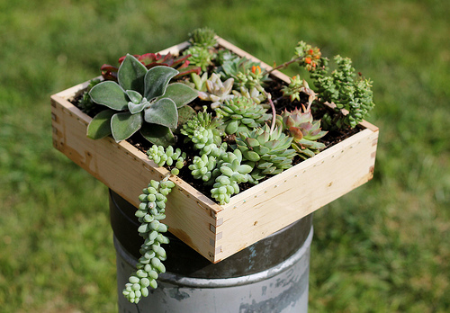 Radmegan's DIY Succulent Box