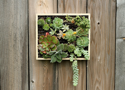 Wall-Mounted Succulent Garden