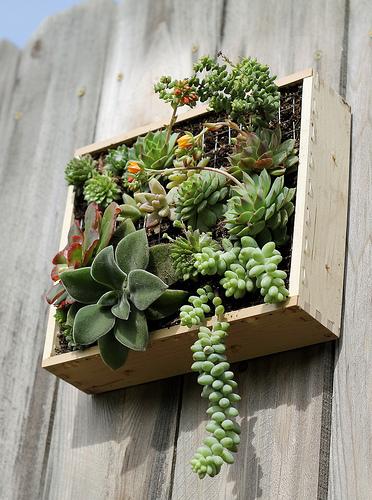 My Hanging Garden!