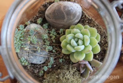 DIY Terrarium Class at the Urban Craft Center!