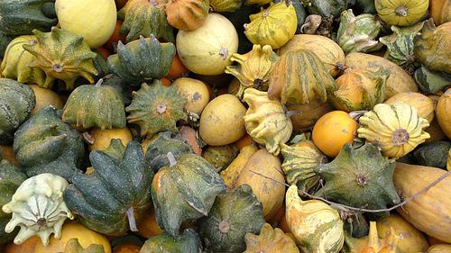 Star gourds