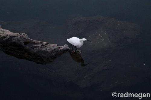 Photo Saturday: White, Black and Still