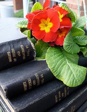 Photo Saturday: Book Planters