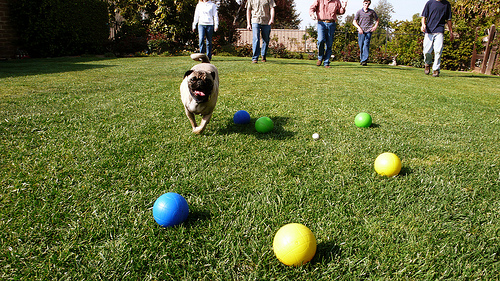 Photo Saturday: Bocce Pug