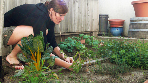 Vegetable Gardening in September