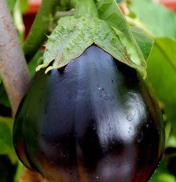 Anyone have any good eggplant recipes?