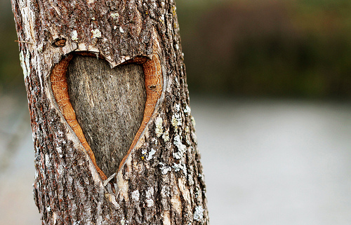 Photo Saturday: The Loving Tree