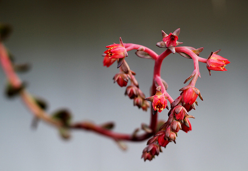 Grow Your Heart! Heart-Shaped Plants & Flowers for Valentine's Day