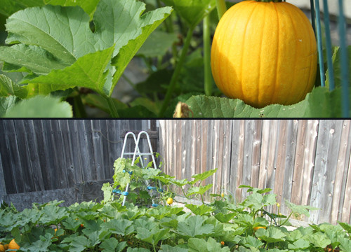 Photo Saturday: Those Aren't Watermelons