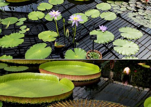Photo Saturday: Kew Gardens, England