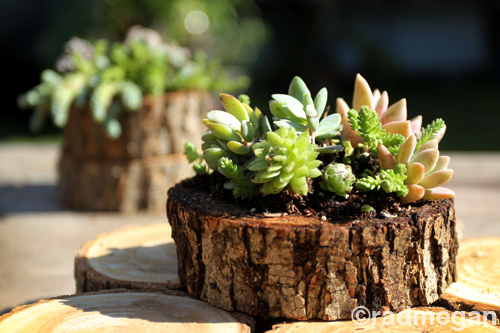 Sea Urchin and Wood Slice Succulent Planters