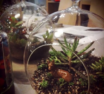 Photo Saturday: Student Terrariums!