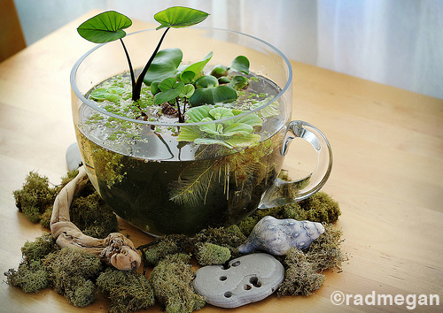 Indoor Tabletop Water Garden Radmegan