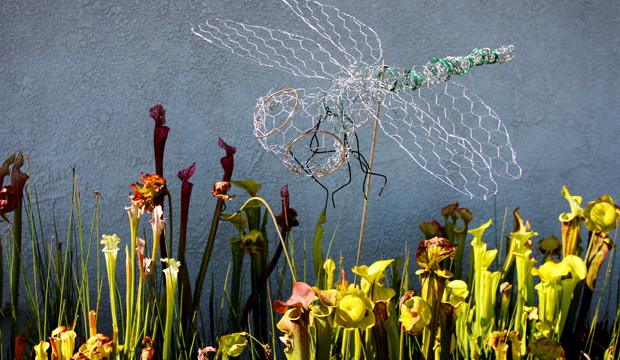Theraputic Chicken Wire Dragonflies