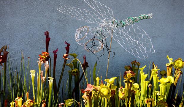 Theraputic Chicken Wire Dragonflies